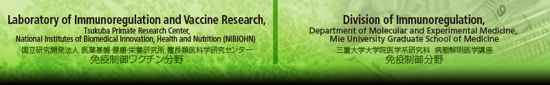 Laboratory of Immunoregulation and Vaccine Research, Tsukuba Primate Research Center, National Institute of Biomedical Innovation ・ Division of Immunoregulation, Department of Molecular and Experimental Medicine, Mie University Graduate School of Medicine